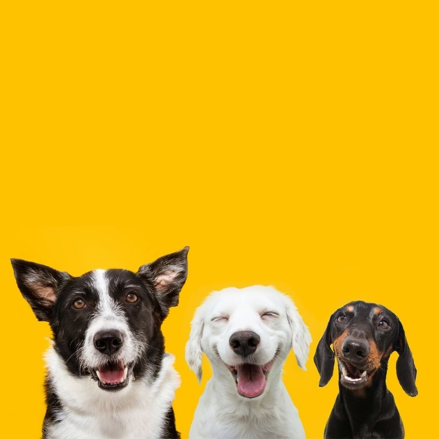 Top Dog Film Festival